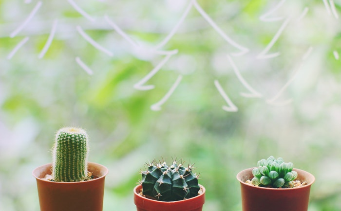 Just add plants... succulents!, spring cleaning hacks