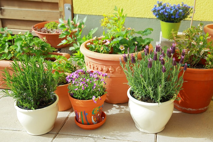 easy outdoor plants, backyard ideas on a budget